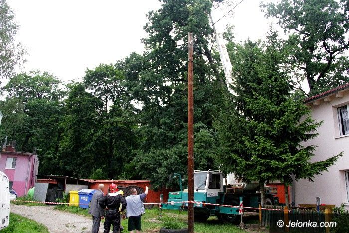 Jelenia Góra: Wichura  powaliła drzewo przy Lwóweckiej