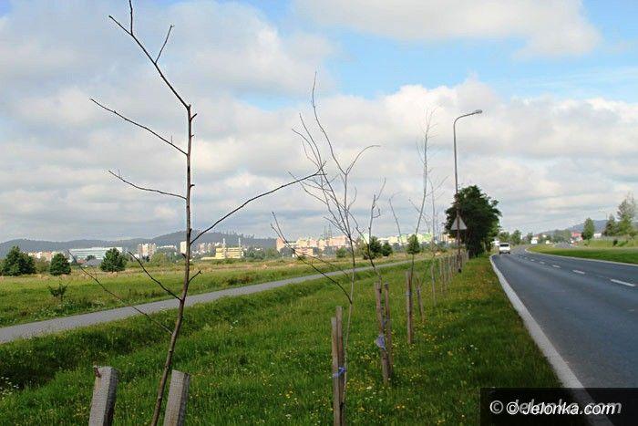 Jelenia Góra: Czytelnik: Kto zapłaci za martwe drzewka?