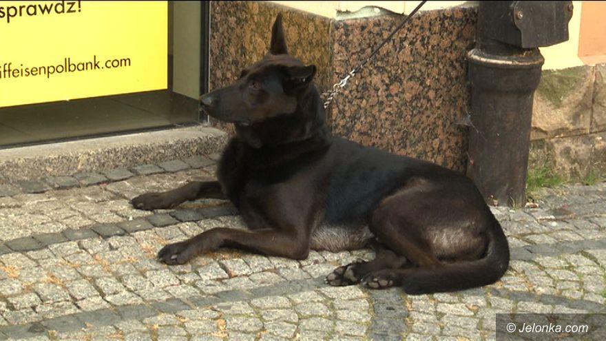 Jelenia Góra: Sprzątaj po swoim psie