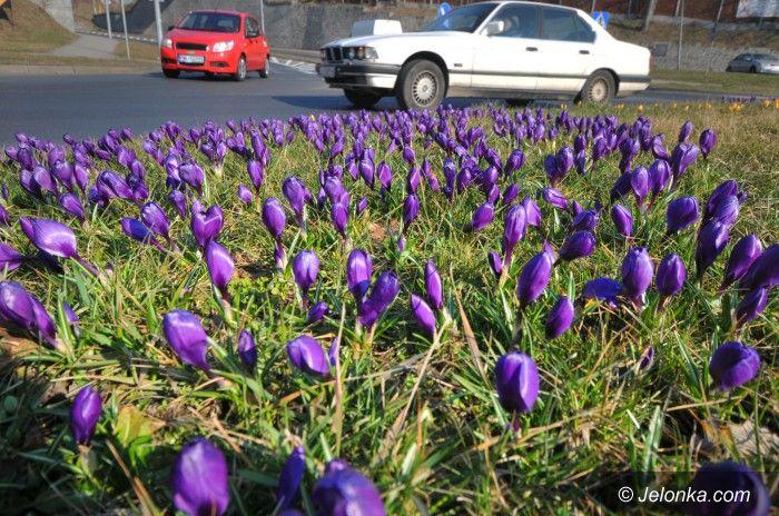 Jelenia Góra: Idzie zima, czas… sadzić kwiaty!