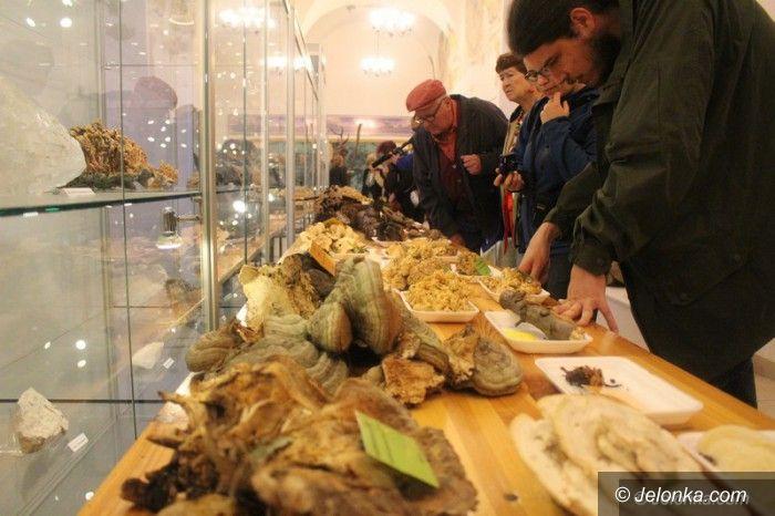 Jelenia Góra: 200 gatunków na wystawie świeżych grzybów