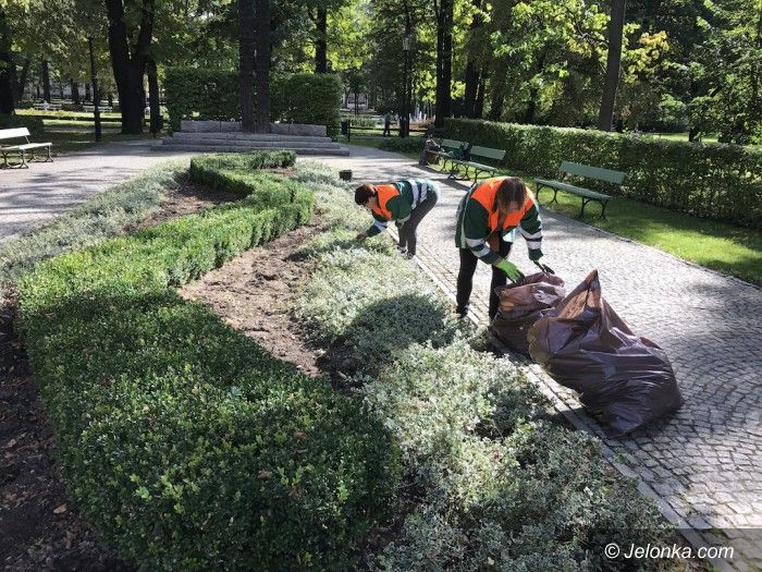 Jelenia Góra: Znowu w mieście przybędzie roślin