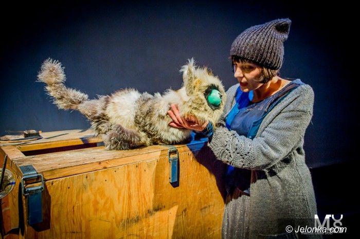 Jelenia Góra: Kot Zen w niedzielę w Zdrojowym, a za tydzień…