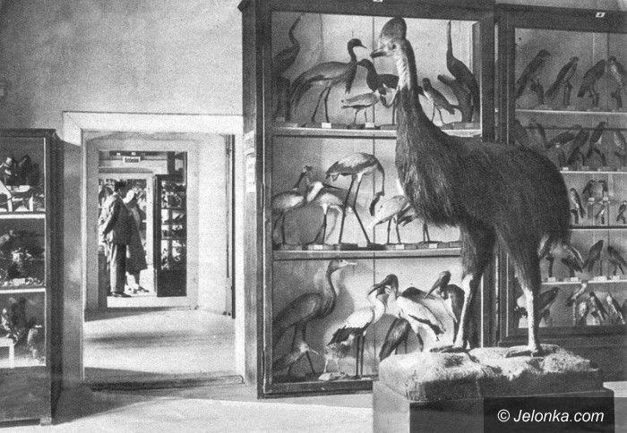 Jelenia Góra: Historia zbiorów ornitologicznych po 1945 roku