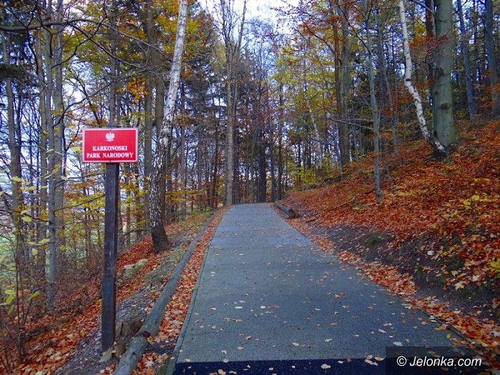 Region: W KPN–ie usuwają niebezpieczne drzewa i gałęzie