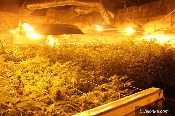 "Region: Profesjonalna ""fabryka"" marihuany zlikwidowana"