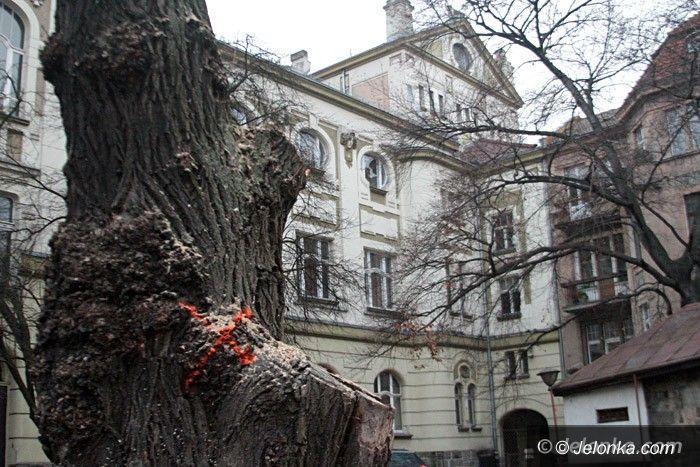 Jelenia Góra: Czytelnicy: komu przeszkadzały drzewa przy teatrze?