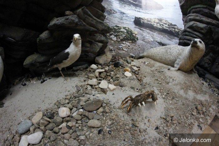 Jelenia Góra: Ptaki mórz północnych w Jeleniej Górze