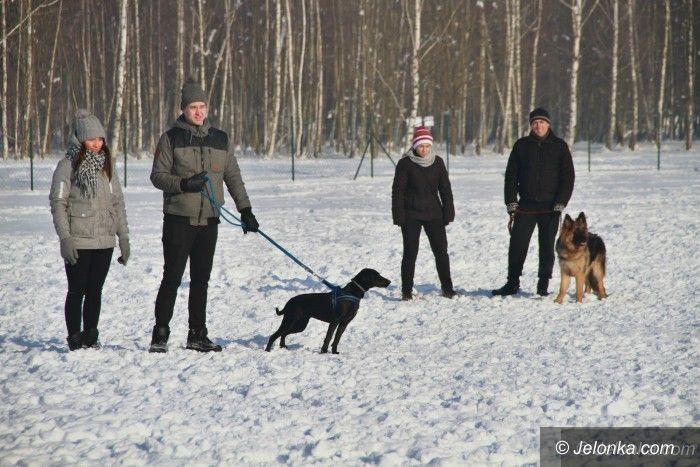 Jelenia Góra: W psim parku było darmowe szkolenie psów
