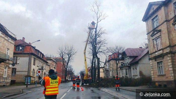 Jelenia Góra: Z Wojska  Polskiego znikają stare drzewa