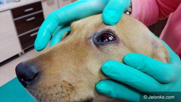 Jelenia Góra: Dusili, podtapiali i głodzili swoje psy – proces jutro