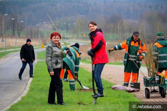 Jelenia Góra: Sadzili drzewka wzdłuż Wróblewskiego