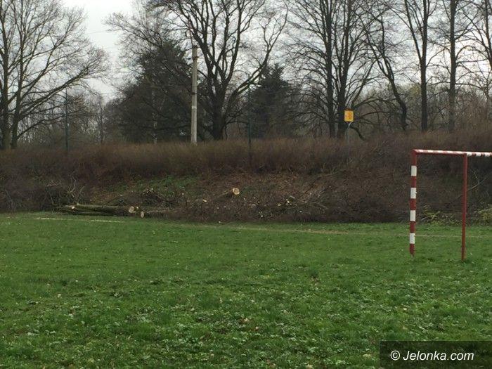 Jelenia Góra: Po co wycinano drzewa przy torach kolejowych?