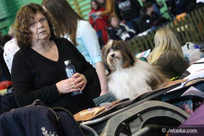 Jelenia Góra: Rasowe psy opanowały Park Sportowy