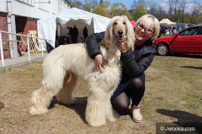 Jelenia Góra: Psie piękności – małe i duże