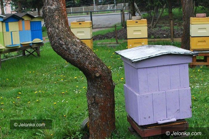 Jelenia Góra: Wkrótce pszczelarskie święto