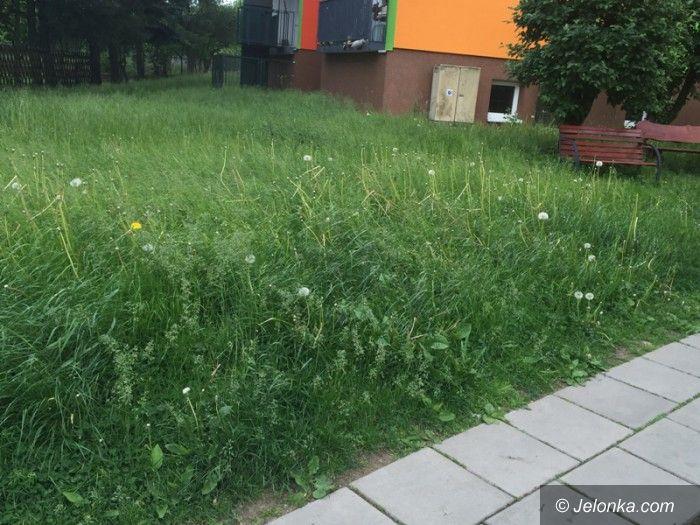 Jelenia Góra: Czytelnik: Kiedy wykoszą trawę przy ulicy Działkowicza?