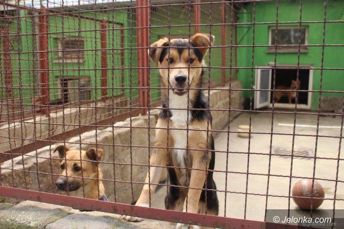 Jelenia Góra: Co się dzieje w schronisku dla zwierząt?