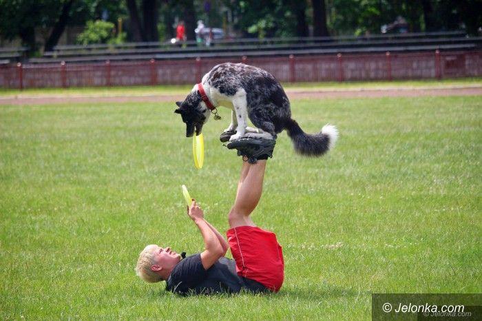 Jelenia Góra: Psie piękności opanowały stadion