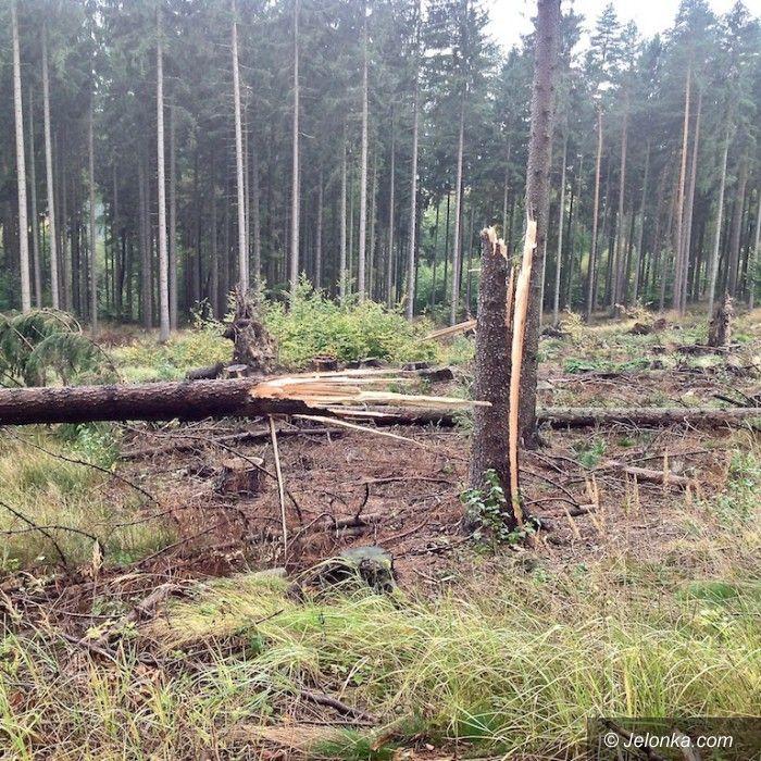 Jelenia Góra: Wichura uszkodziła ponad 300 drzew