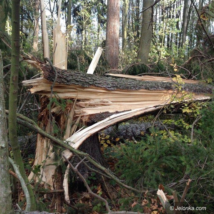Jelenia Góra: Wichura wyrządziła wiele szkód w miejskich lasach