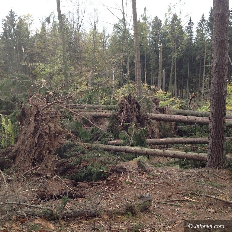 Jelenia Góra: Jeleniogórskie lasy komunalne po kataklizmie