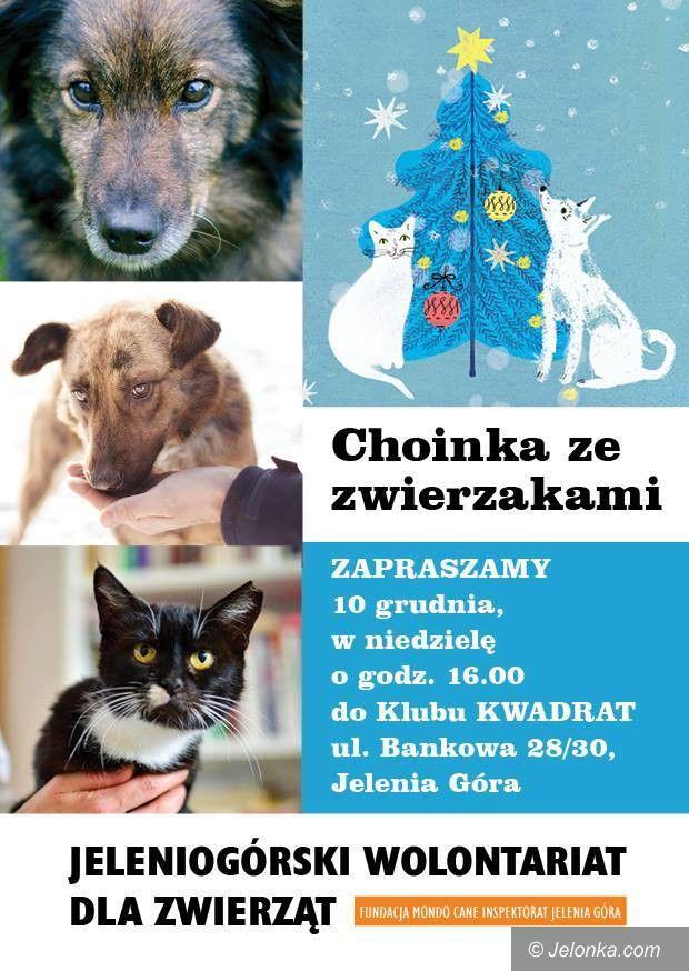 Jelenia Góra: Choinka ze zwierzakami – w Klubie Kwadrat