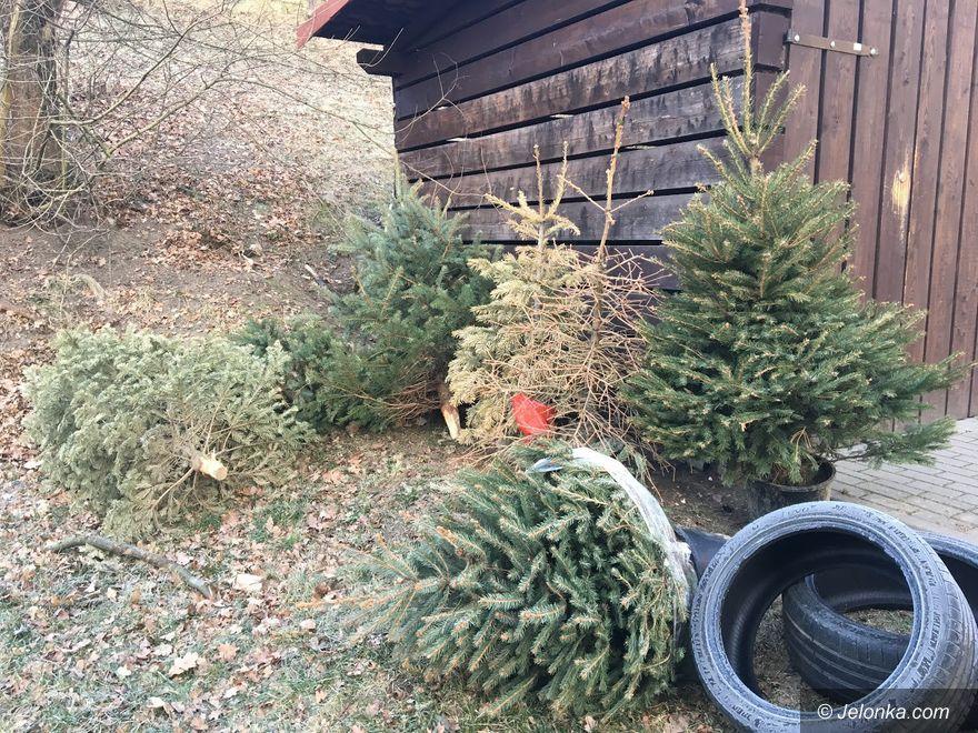 Jelenia Góra: Zapomnieli wywieźć świąteczne choinki