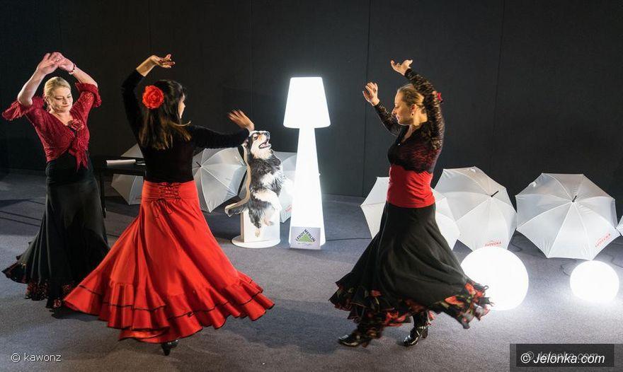 Jelenia Góra: W Kinie Kobiet flamenco i dużo zabawy