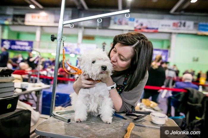 Jelenia Góra: Trwa wystawa psów rasowych