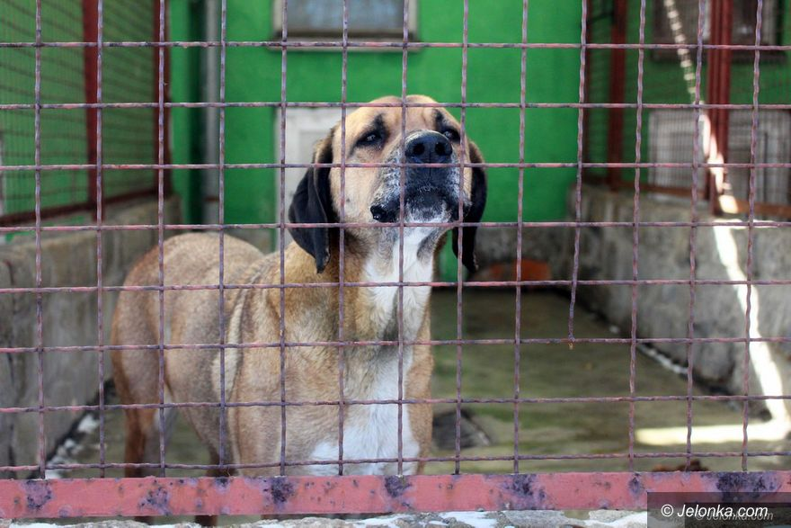 Jelenia Góra: Kulminacja okrucieństwa wobec zwierząt!