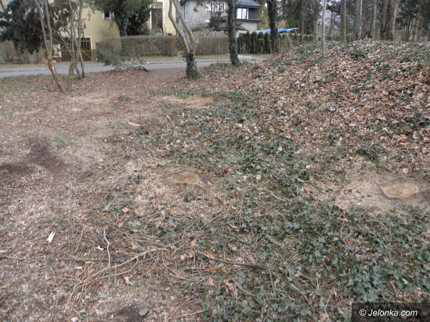Jelenia Góra: Kontrowersje wokół wycinki drzew