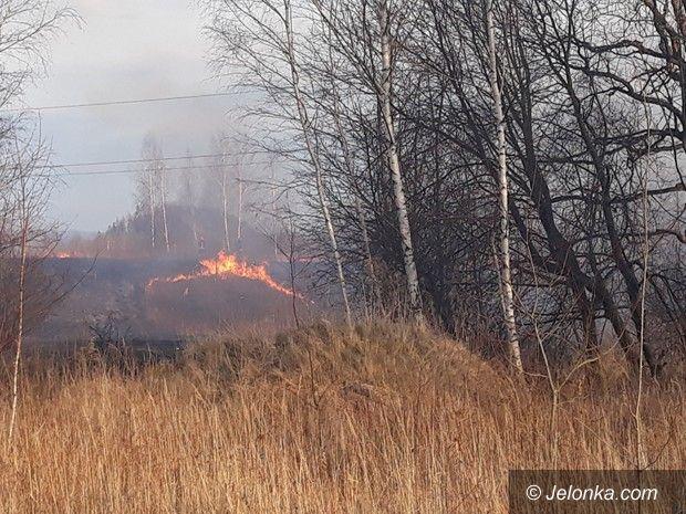 Jelenia Góra: Płonęły łąki przy Karola Miarki