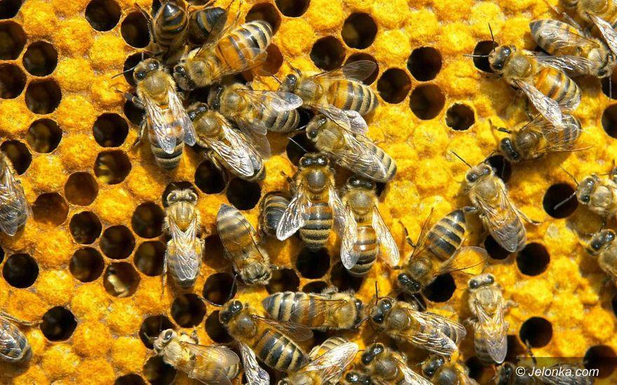 Region: Ratujmy pszczoły!