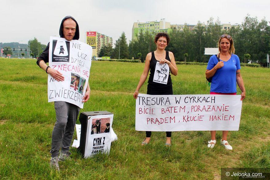 Jelenia Góra: Protestowali pod cyrkiem