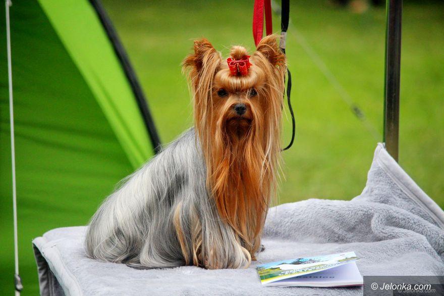 Jelenia Góra: Wystawa psów – jeszcze dzisiaj