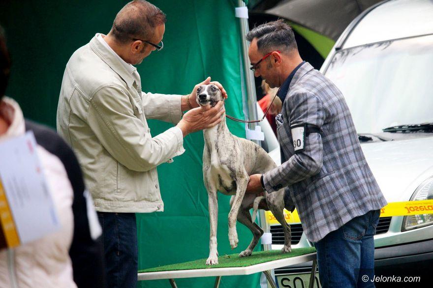 Jelenia Góra: Ponad tysiąc psów na krajowej wystawie