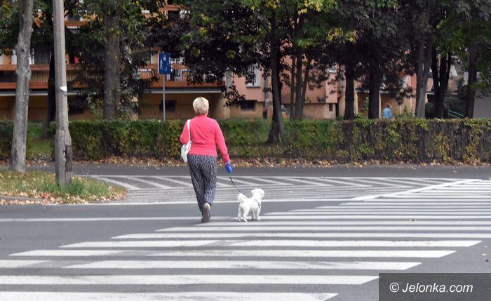 Jelenia Góra: Na Zabobrzu psi problem ze smyczą