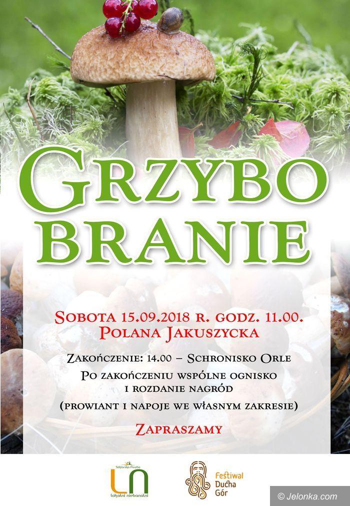 Szklarska Poręba: Grzybobranie 2018 na Polanie Jakuszyckiej
