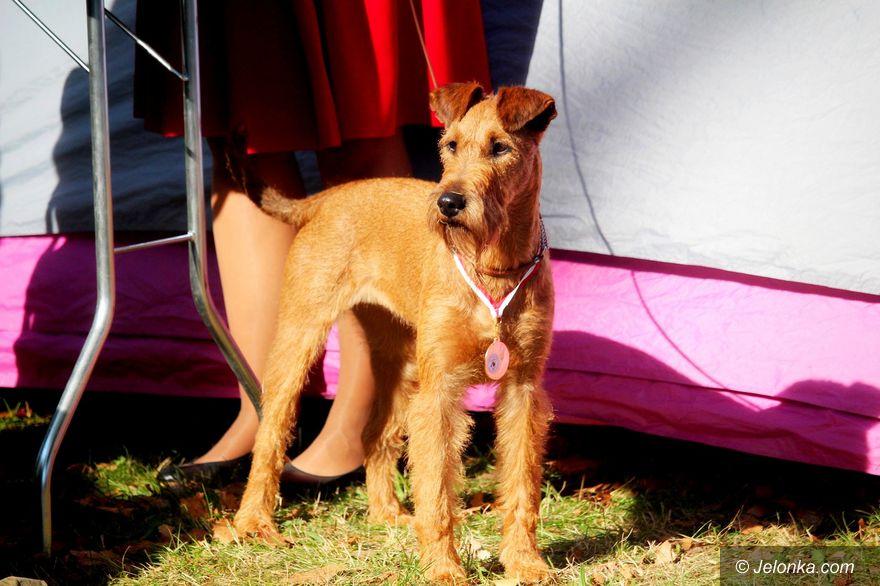 Jelenia Góra: Jesienna wystawa psów rasowych za nami