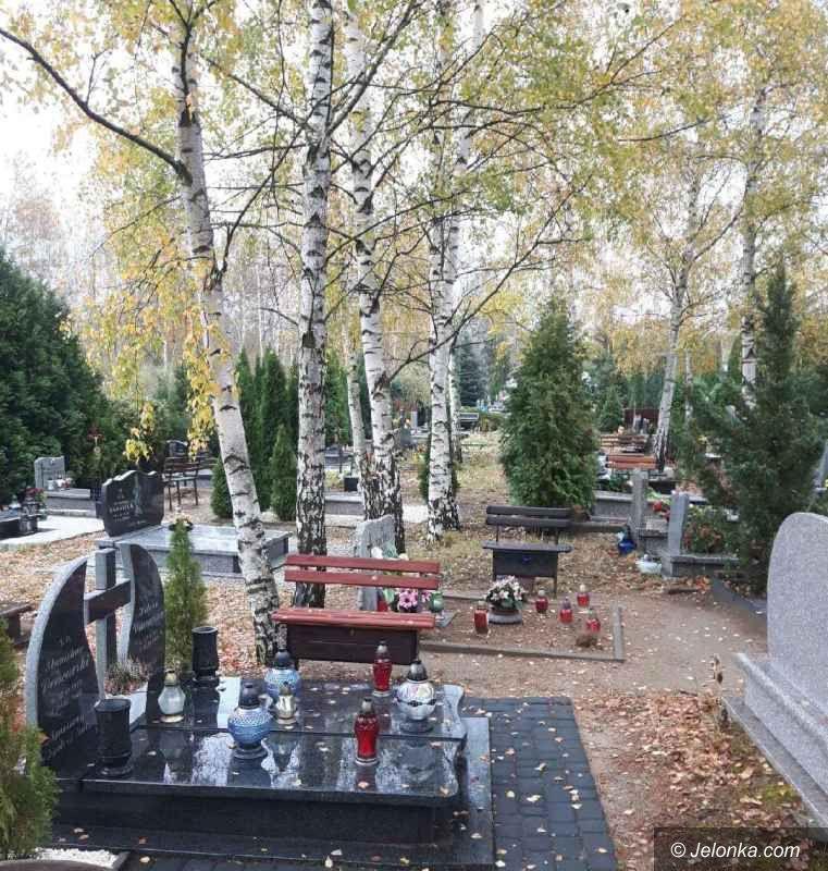 Jelenia Góra: Uwaga na drzewa!