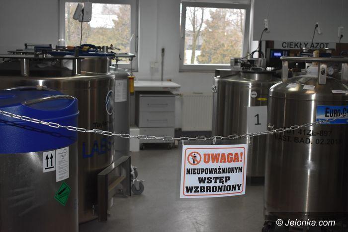 Miłków: Leśny Bank Genów Kostrzyca pomaga Puszczy Białowieskiej