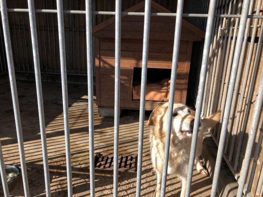 Jelenia Góra: Warto pomóc schronisku