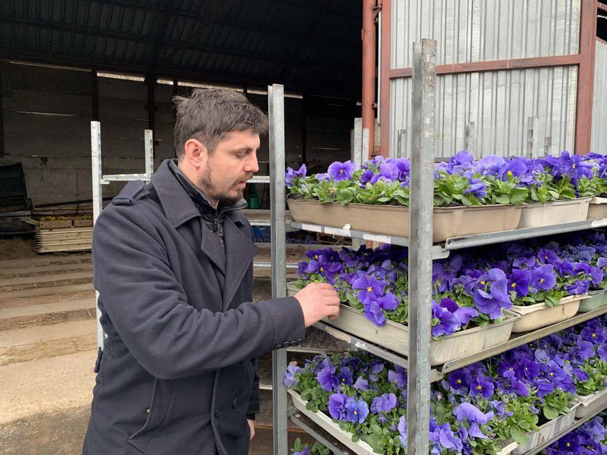 Jelenia Góra: Moc kwiatów na miejskie skwery