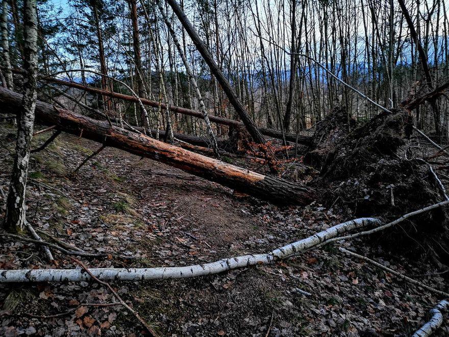Jelenia Góra: Cmentarzysko drzew