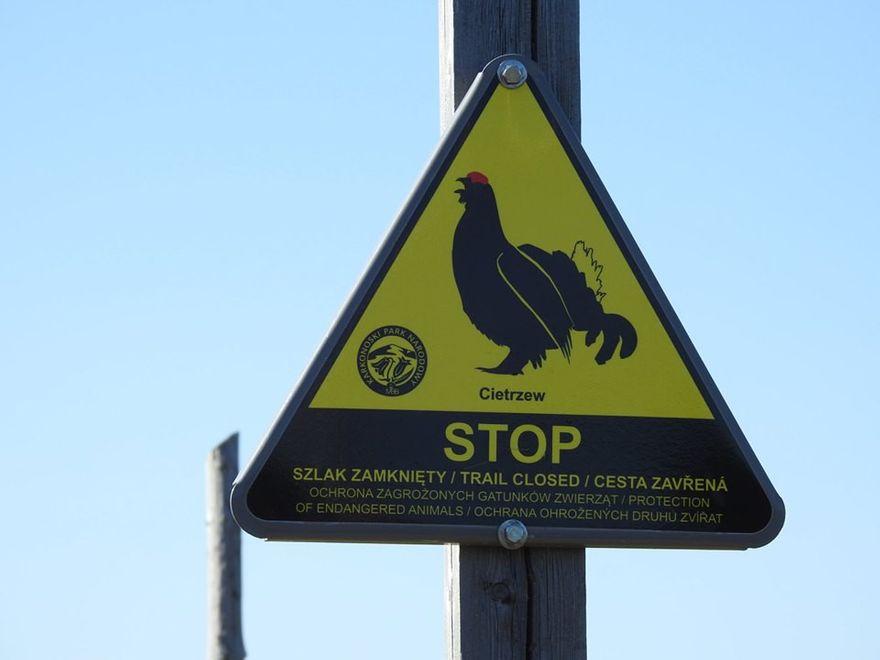 Powiat: KPN pilnuje spokoju ptaków