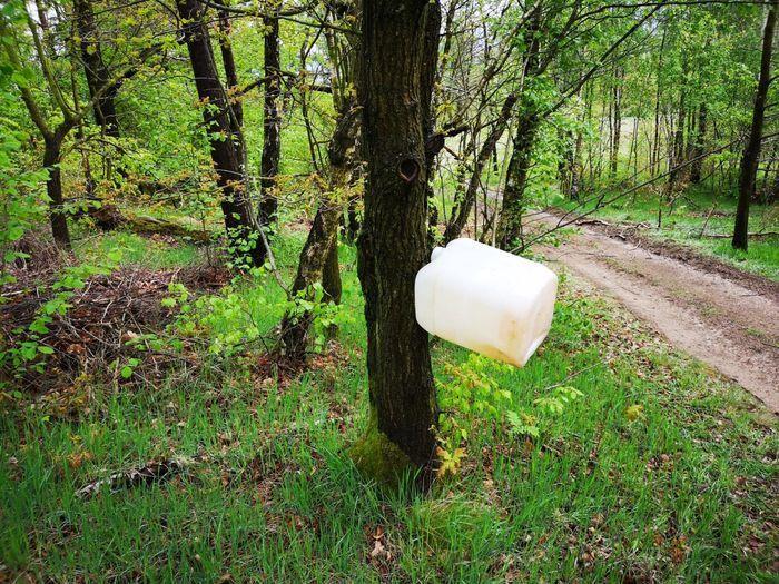 Jelenia Góra: Rajd zdewastował las?