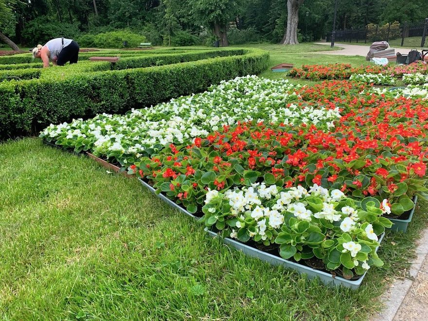 Jelenia Góra: Przybywa kwiatów w Parku Zdrojowym