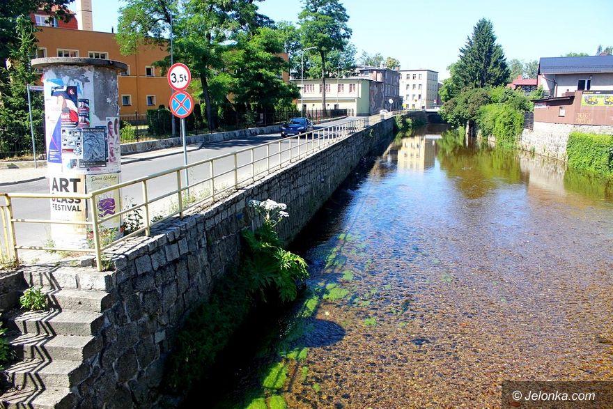 Jelenia Góra: Barszcz Sosnowskiego w korycie Kamiennej (aktualizacja)