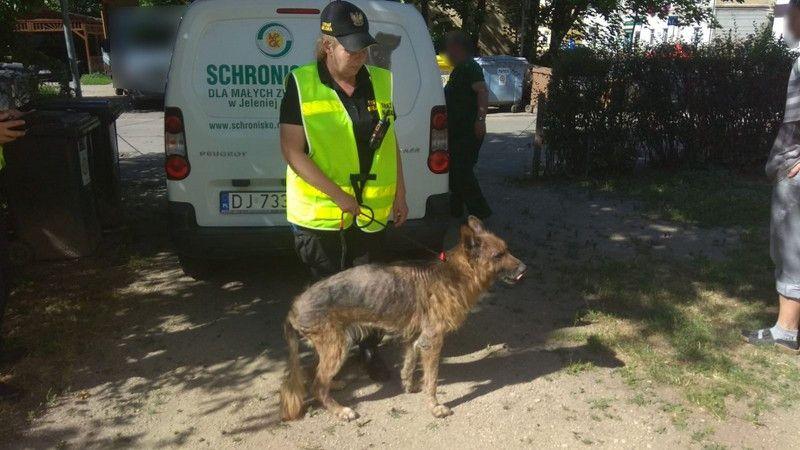 Jelenia Góra: Strażnicy ratowali zaniedbanego psa